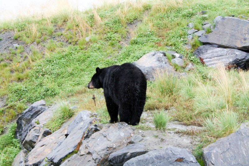 Alaska Cruise - Day 9 - Whittier and Anchorage